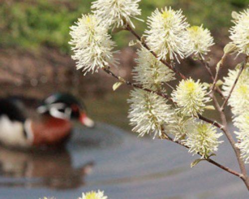 Syracuse Zoo Duck Plant Flower